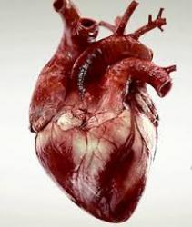 Tóm tắt hướng dẫn của Acc/Aha/Hrs năm 2018 về đánh giá và điều chỉnh các bệnh nhân nhịp chậm và chậm dẫn truyền tim (P.3)