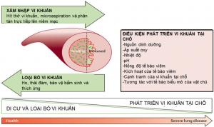 PHENOTYPE ĐỢT CẤP COPD & NHIỄM KHUẨN HÔ HẤP