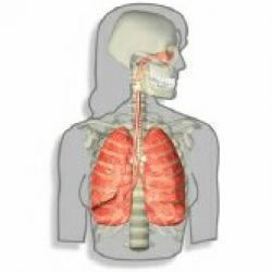 Xét nghiệm gen trong đàm nhiều hứa hẹn trong phát hiện ung thư phổi